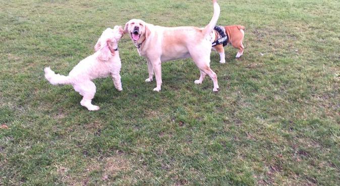 Sarah's Dog Walks, dog sitter in Hornchurch