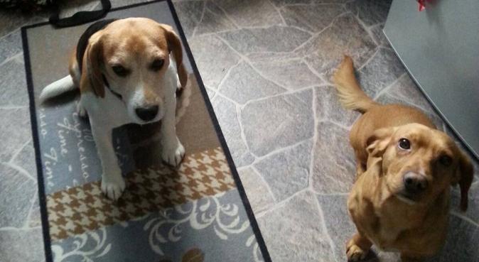 Hundeparadies in Großbeeren, Hundesitter in Großbeeren