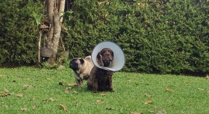 Dog lover in Berlin, Hundesitter in Berlin