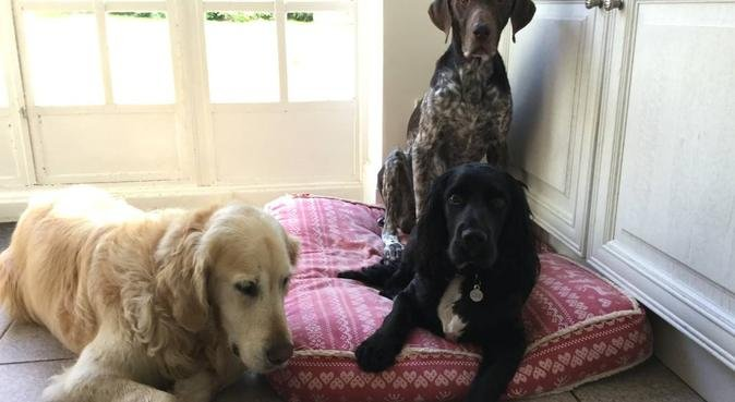 Surrey Dog Boarding, dog sitter in Camberley