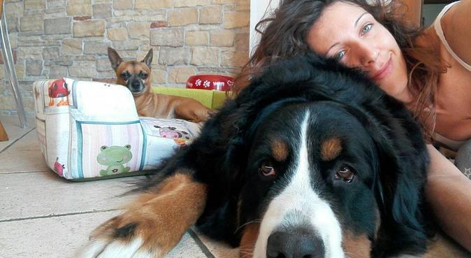 ❤Il tuo amico a 4 zampe come se fosse mio❤, dog sitter a Verona