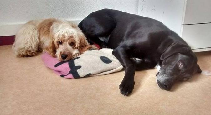 Garde d'animaux à l'école véto !, dog sitter à Toulouse