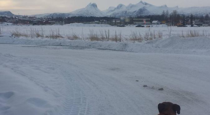 Pålitelig og snill turkamerat for din hund., hundepassere i Bodø
