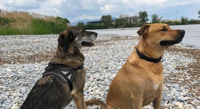 De sympathiques & jolies garderies en sécurité !, dog sitter à Cagnes-sur-Mer