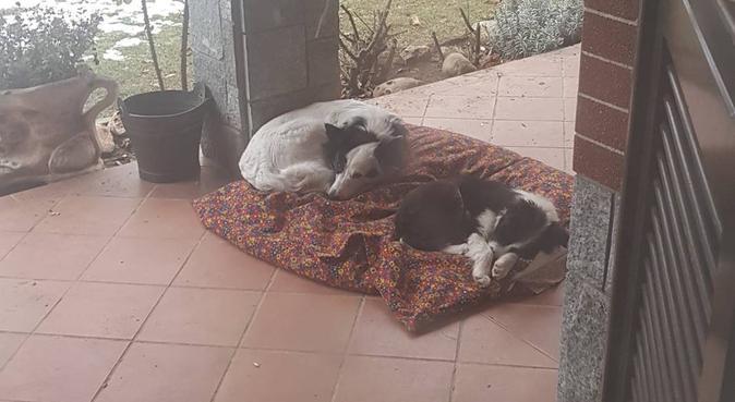 Mangia Passeggia Gioca, dog sitter a Torino