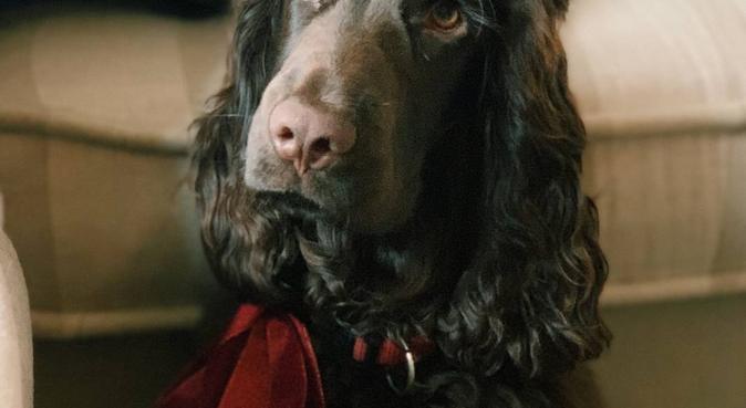 Walk buddies in the heart of Aberdeen, dog sitter in Aberdeen, Vereinigtes Königreich