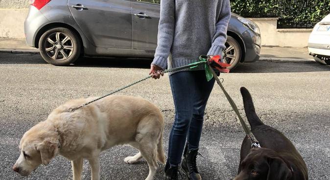 Coccole e divertimento garantiti!!, dog sitter a Roma, RM, Italia