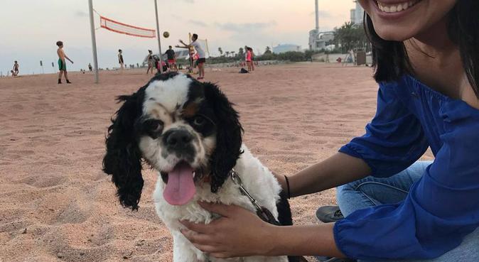 Diversión y cuidado para perritos, canguro en Barcelona