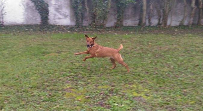 Propose mon temps et mon amour pour vos animaux., dog sitter à Bouc-Bel-Air