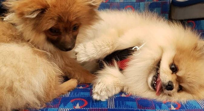 E14 customised walk+training by experienced sitter, dog sitter à London