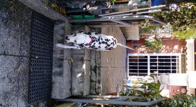Lo zoo non mi basterebbe!, dog sitter a Modena