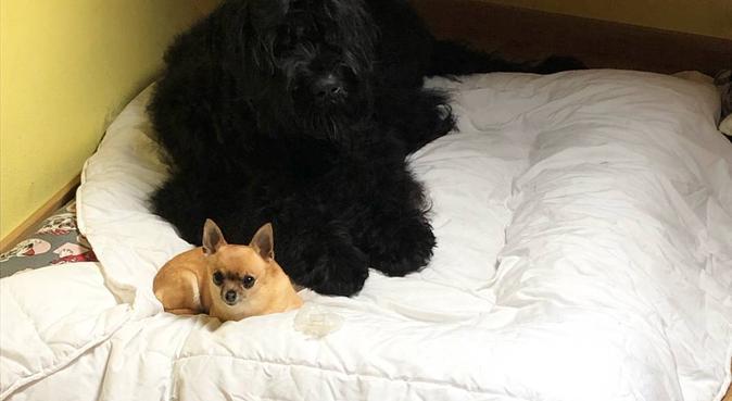 La enfermera mejor amiga de los perros, canguro en Arteixo