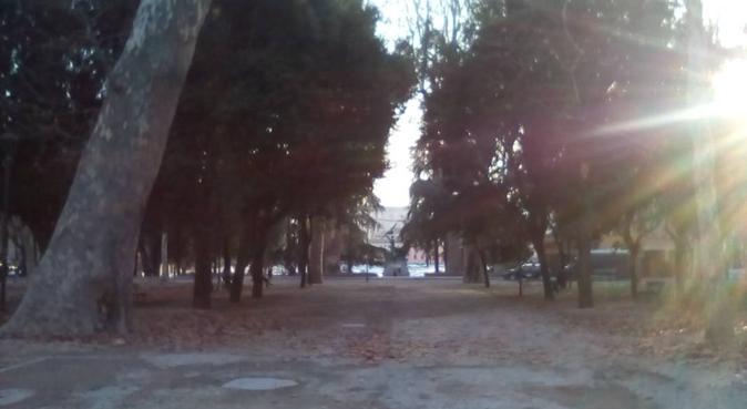 Le migliori carezze e passeggiate per amici pelosi, dog sitter a Bologna