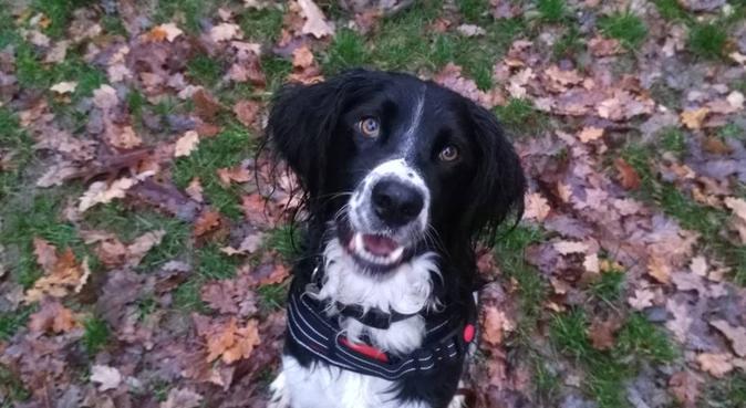 Dogsitter expérimentée et qualifiée, dog sitter à Toulouse
