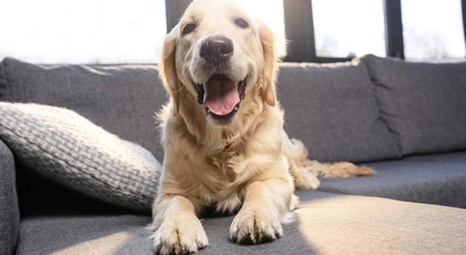 PASSEGGIATE E TRANQUILLITA' PER I VOSTRI AMICI, dog sitter a napoli