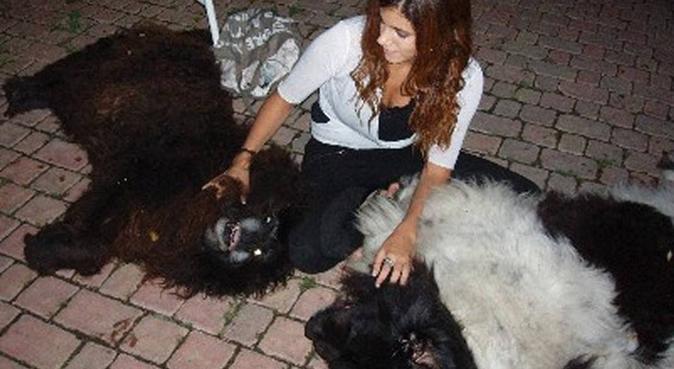 MI CASA ES TU CASA!, dog sitter a Modena