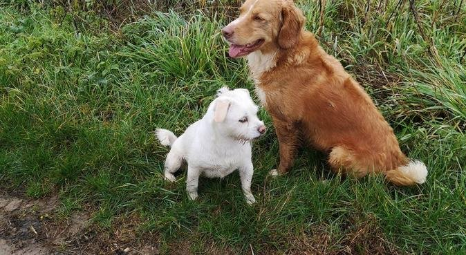 LittlePawsBigPaws home from home dog sitting, dog sitter in Ashford