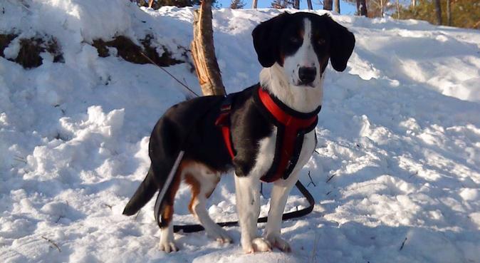 Vokst opp med hund, glad i tur i skog og mark!, hundepassere i Vestby