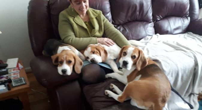 Donna's dog sitting, dog sitter in Ashford