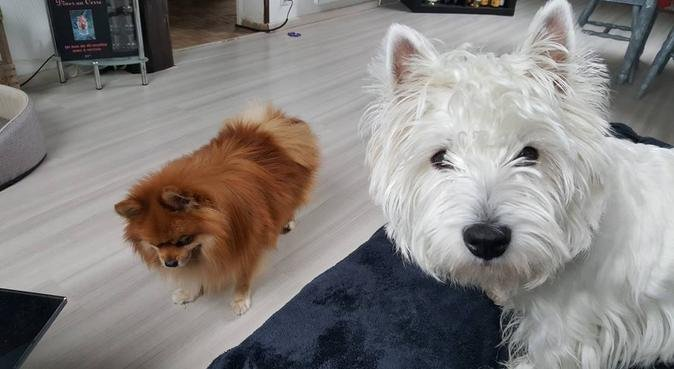 Moments tout en complicité., dog sitter à Bischheim
