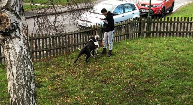 The doggy lover, dog sitter in Birmingham
