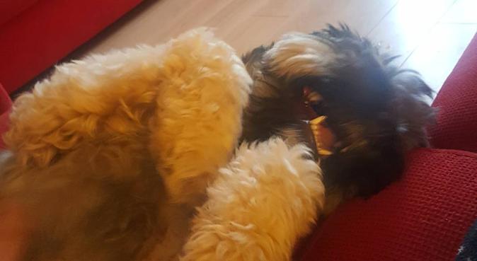 Loads of dog cuddles in Aberdeen, dog sitter in Aberdeen