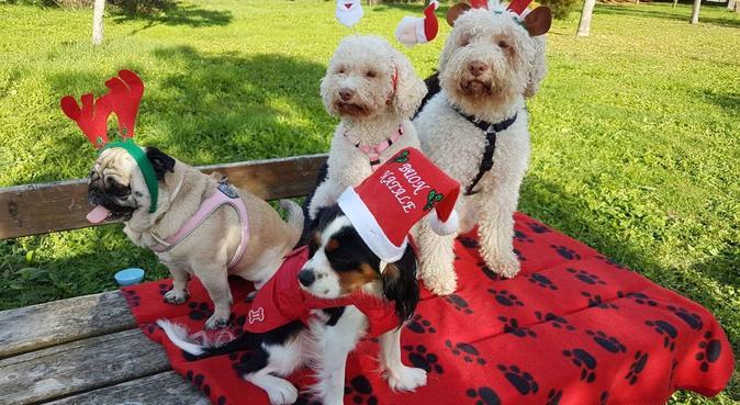 Ogni giorno insieme con cure coccole e gioco, dog sitter a Milano, MI, Italia