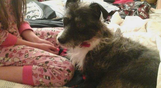 A Dogs Home from Home, dog sitter in Northampton