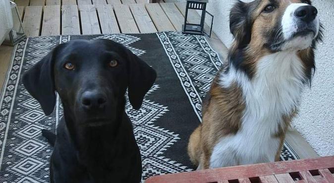Trygg och erfaren hundkompis, hundvakt nära Täby