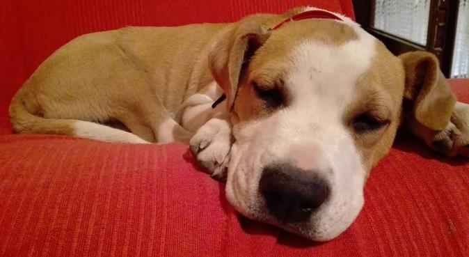 Giochi, coccole, lunghe passeggiate e tanto amore!, dog sitter a Padova, PD, Italia