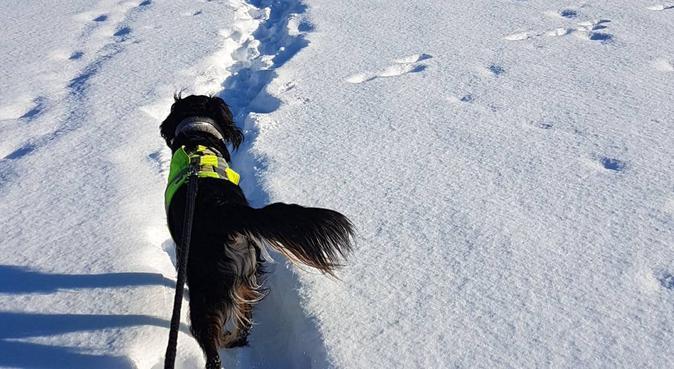 Dagpass og turer i skogen, hundepassere i Jessheim