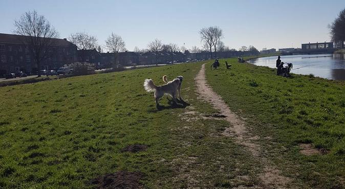 Hondenoppas Doggielove, hondenoppas in Gouda
