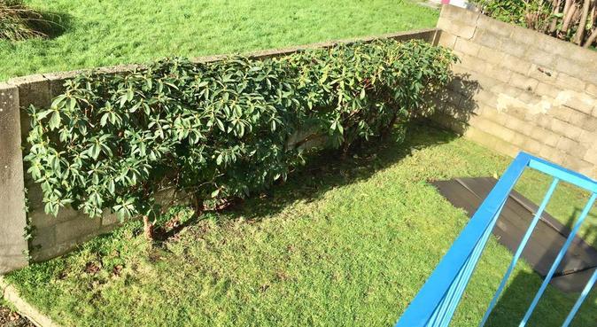 Le bonheur dans le jardin, dog sitter à Brest