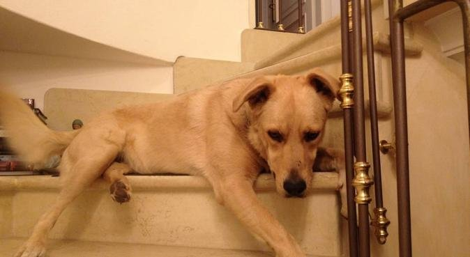 Amo i cani per lo splendido rapporto si crea, dog sitter a Verona