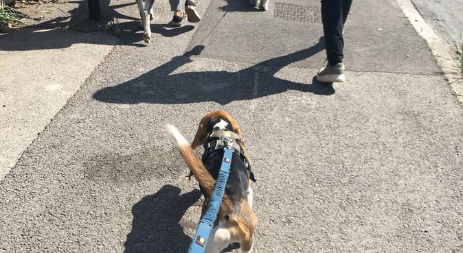De l'amour et des promenades a gogo sur Aix 🌿🐶, dog sitter à Aix-en-Provence, France