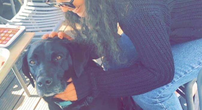 Dogs lover, dog sitter à Pau