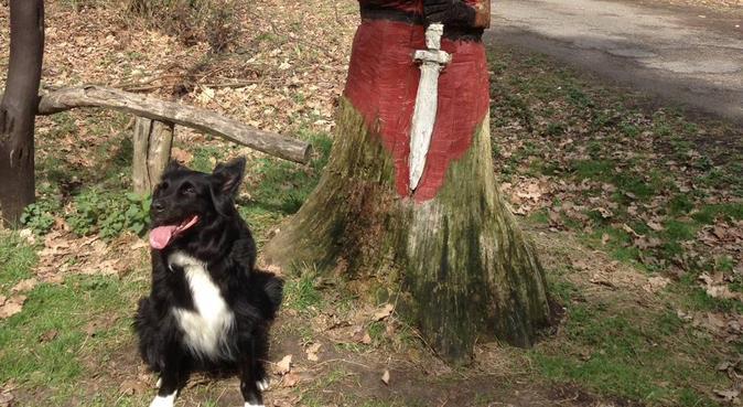 Turglad 24'åring søker turvenn😍🐶, hundepassere i Trondheim