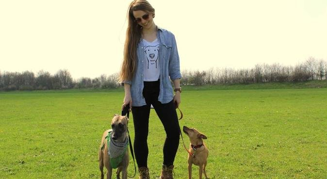 Experienced dog walker/sitter at your disposal :), dog sitter in Woking