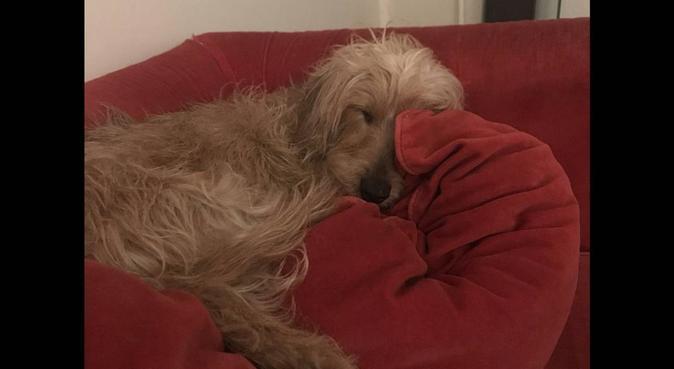 Des câlins pour vos chiens ❤️, dog sitter à Bourges