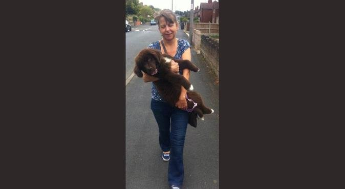 A friendly & fun home away from home for all dogs!, dog sitter in West Bromwich