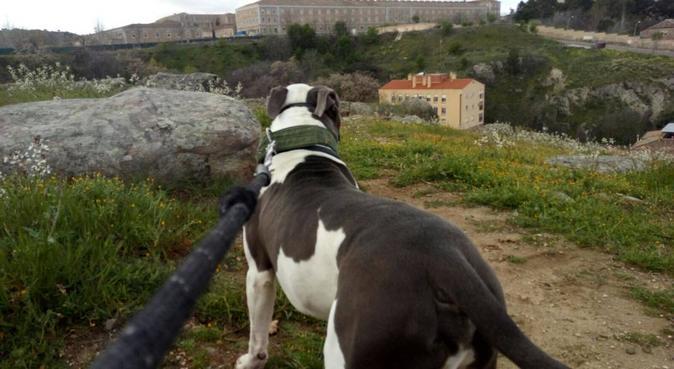 PARAÍSO PERRUNO AL ALCANCE DE CUALQUIER BOLSILLO, canguro en Toledo
