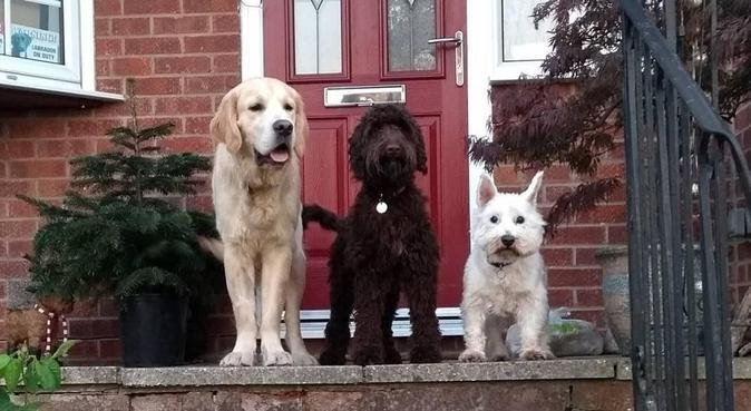 Dog walking and pet pop-in with Joanne, dog sitter in Poole