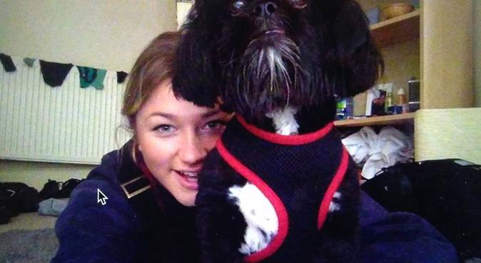 Doggys dream daycare, dog sitter in Glasgow