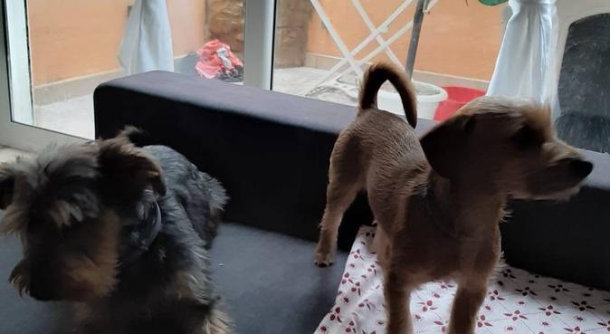 Cuidadores perritos, gatos..., canguro en Sant Feliu de Guixols