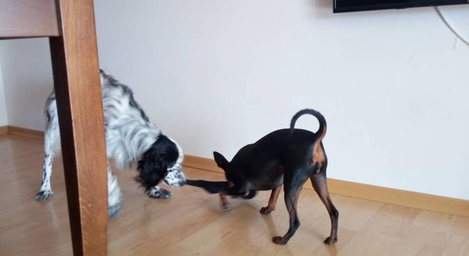 Lunghe passeggiate :), dog sitter a Bagnoli, NA, Italia