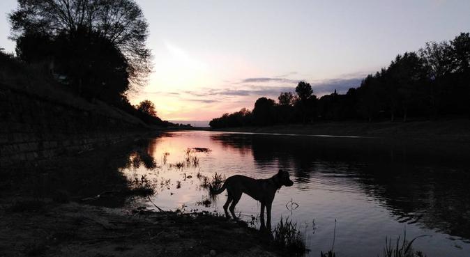 Coccole e passeggiate lungarno, dog sitter a Firenze, FI, Italia