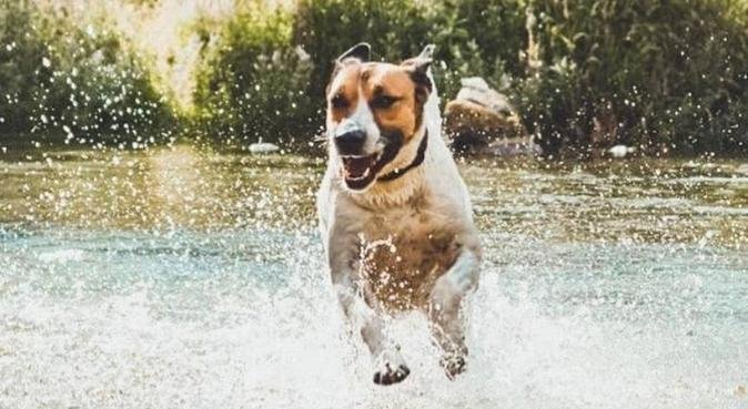 CURA, AMORE, COCCOLE E TANTE PASSEGGIATE ❤️, dog sitter a Bolano, SP, Italia