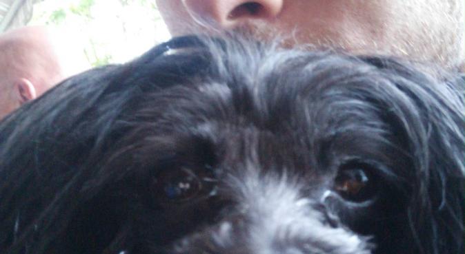 Hundsvag student, garanterad 100% fokus på din hun, hundvakt nära Lund, Sverige