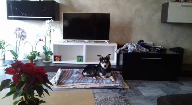 Divertimento e compagnia per amici a 4 zampe, dog sitter a padova