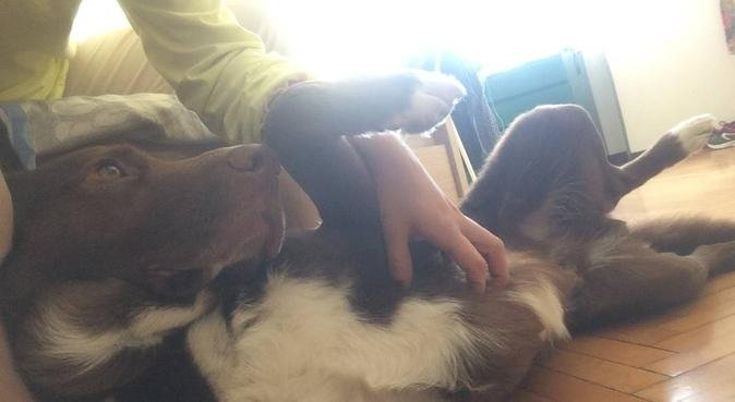 Tante passeggiate in compagnia di amici a 4 zampe, dog sitter a Torino